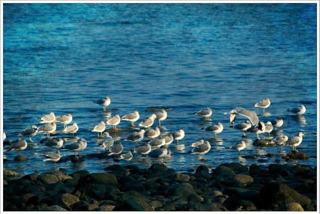 Seagulls at rest