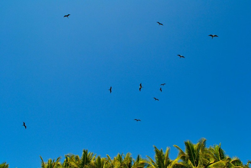 malpais birds