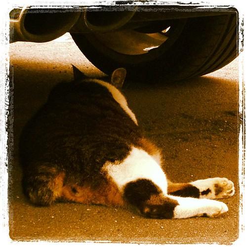 車の下で朝寝坊