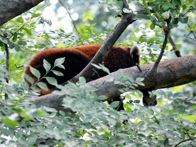 Plotting Panda