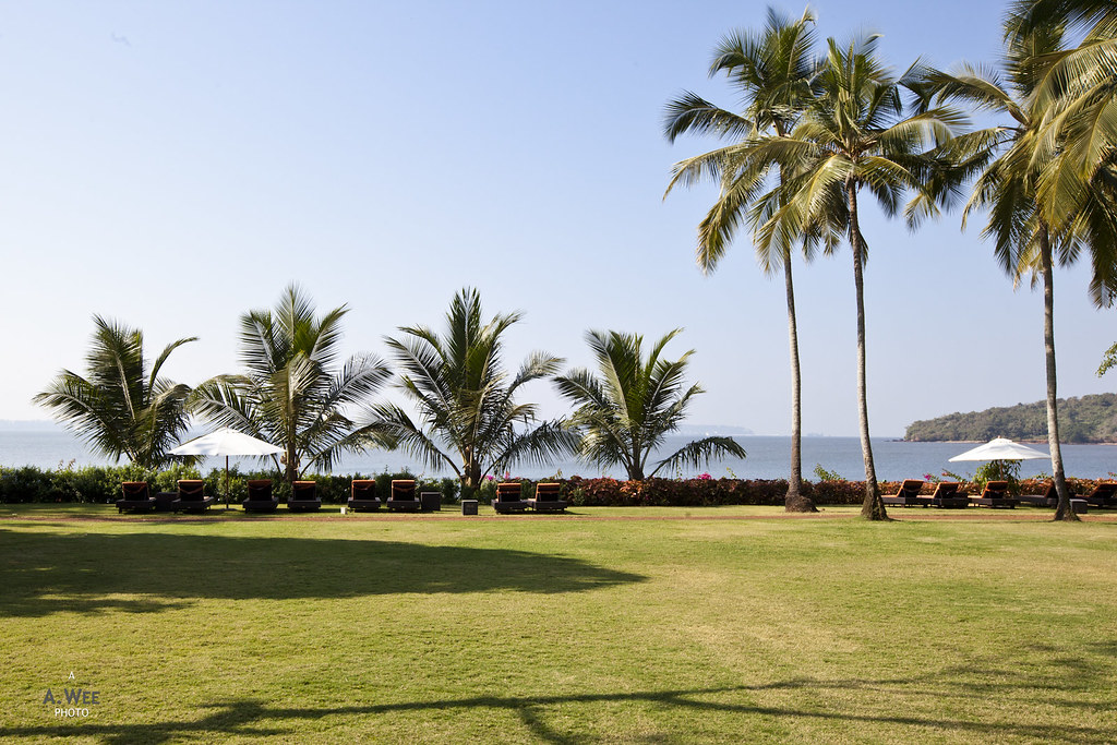 Palm Grove with a Bay View
