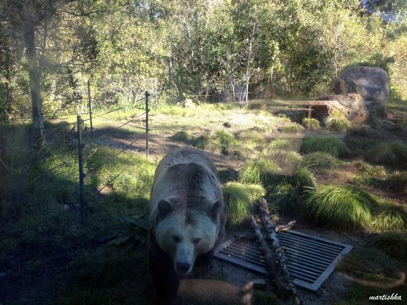San Francisco Zoo (19)