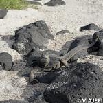 Viajefilos en San Cristobal, Galapagos 052