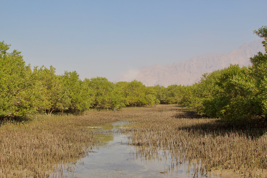 High Resolution Pictures Mangroves