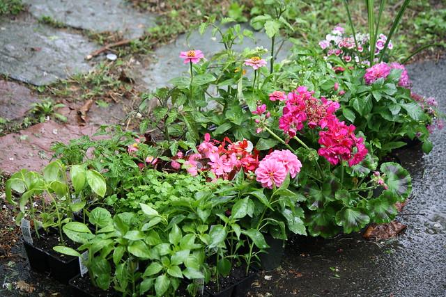 garden center purchases
