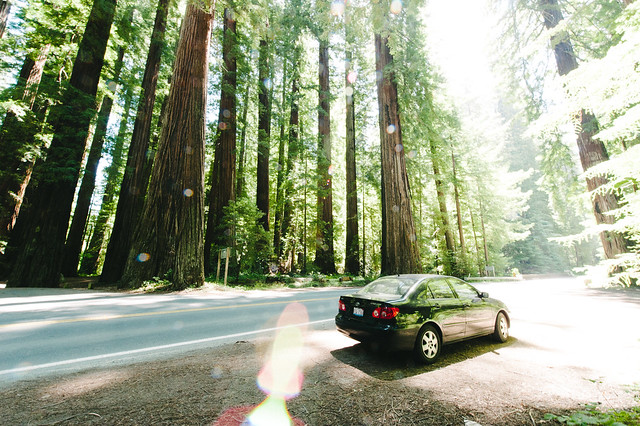 25 Awesome Places You Must Visit Before You Die chalbatohi redwoods