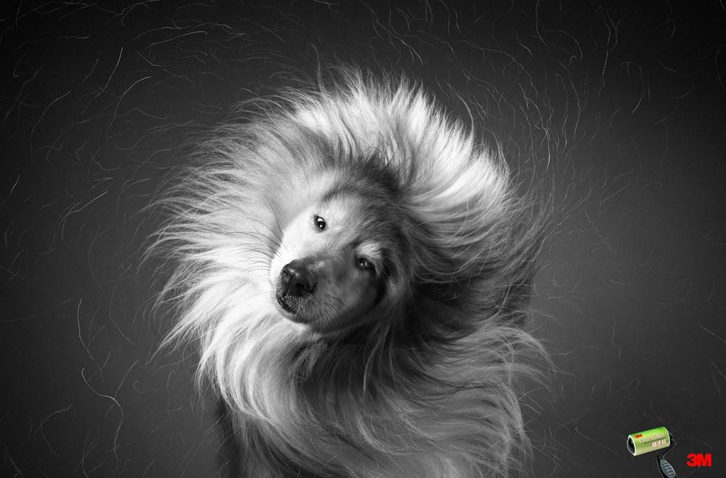 3M - Dog Hair