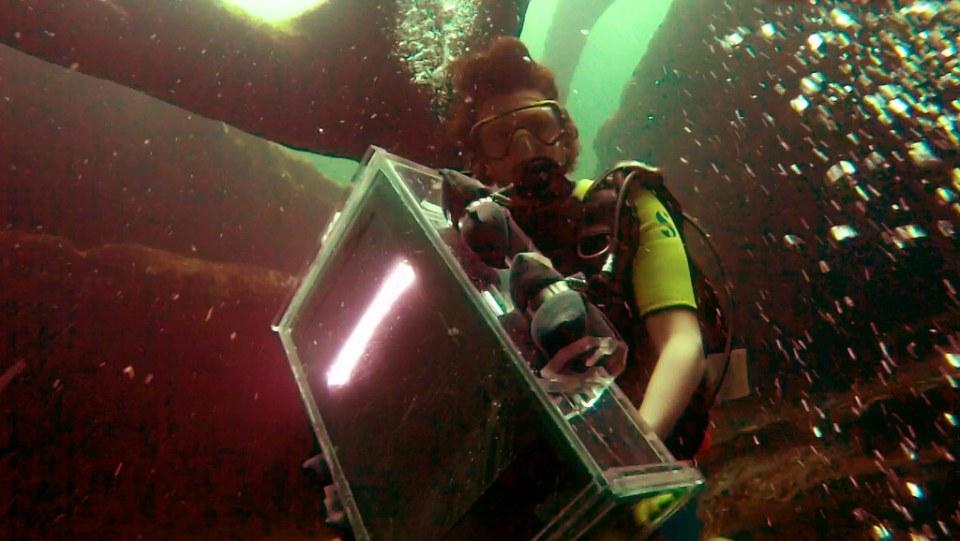 Nathaniel Stern scanning underwater