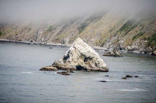 Coastal Redwoods and Fog-025