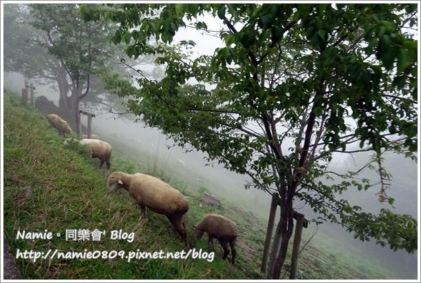 南投。來去清境農場之青青草原看綿羊秀 (放假何處去~Part 3) @ Namie。同樂會 :: 痞客邦