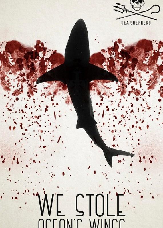 Sea Shepherd - Shark 1