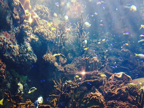 flickr: 自由研究のために海遊館へ