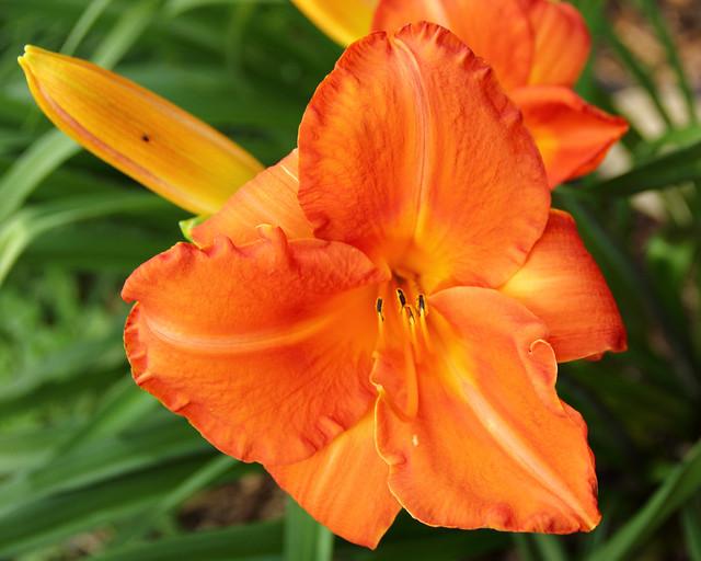 20140623_Flowers_002