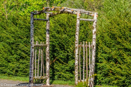 Birch Natural Wedding Arch-2