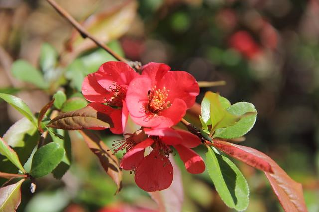 20140427_Spring_Flowers_032
