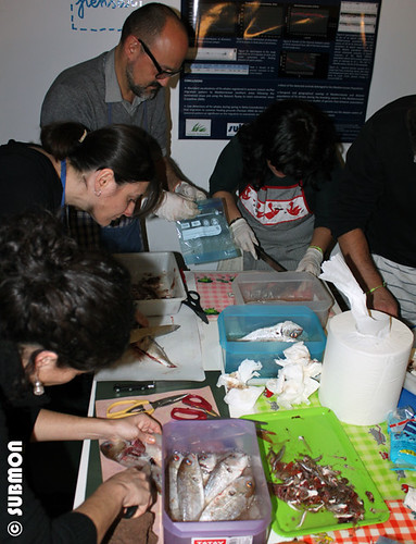 taller limpieza pescado