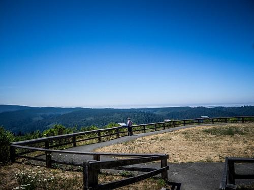 Redwoods and Elk-092