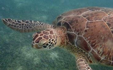 Turtle Bay, Mexico