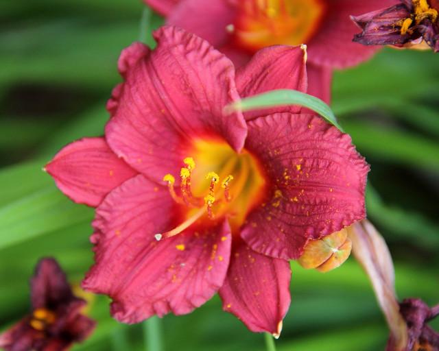 20140704_Flowers_018