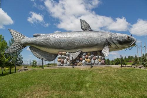Worlds Largest Catfish