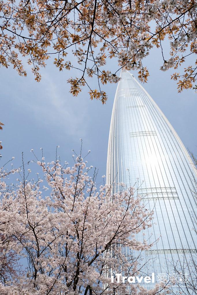 首尔赏樱景点 乐天塔石村湖 (22)