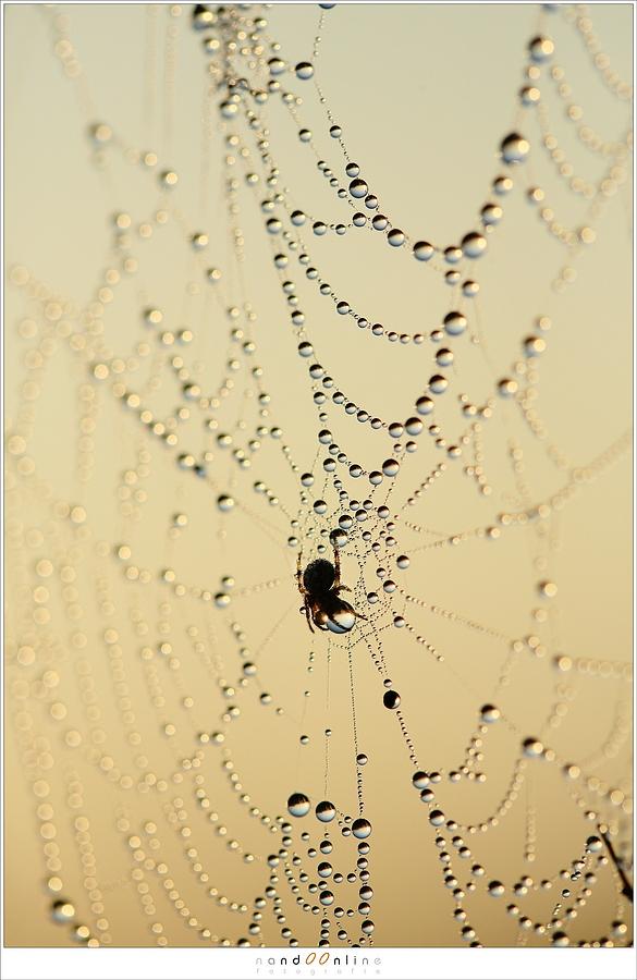 Spinnenwebben met dauw