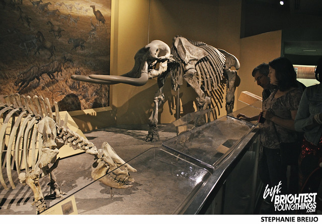 Smithsonian Dinosaur Exhibit Photos Brightest Young Things Stephanie Breijo26