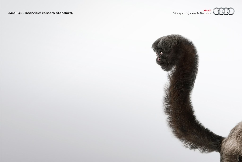 Audi Q5 - Monkey