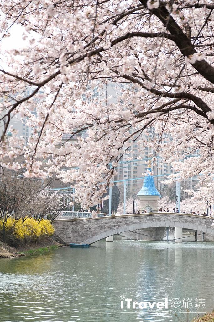 首尔赏樱景点 乐天塔石村湖 (39)