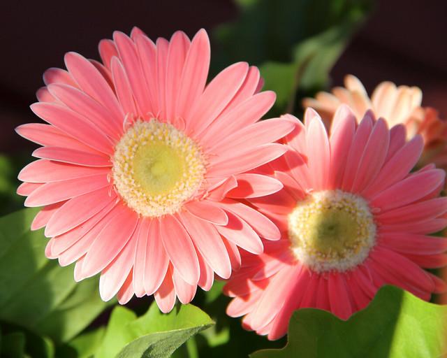 20140704_Flowers_029