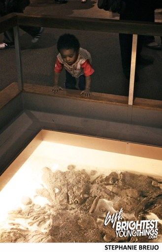Smithsonian Dinosaur Exhibit Photos Brightest Young Things Stephanie Breijo40