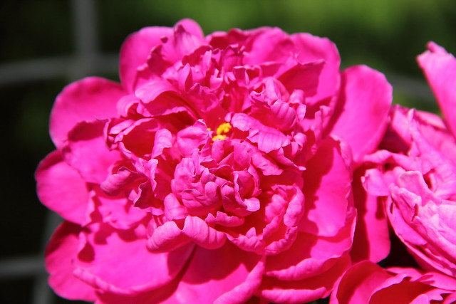 20140601_Flowers_005