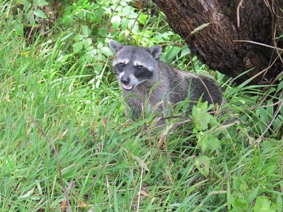 Irazu wildlife Costa Rica