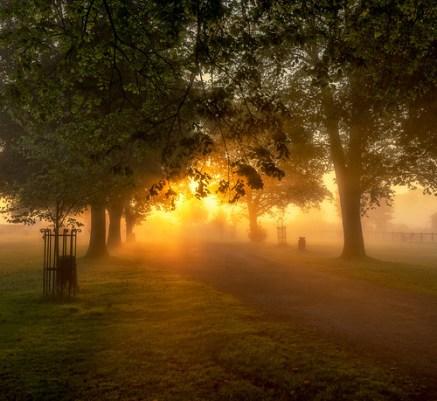 Misty Dawn Glow