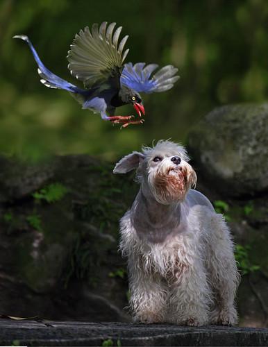 L'oiseau et sa proie, une sélection de photos