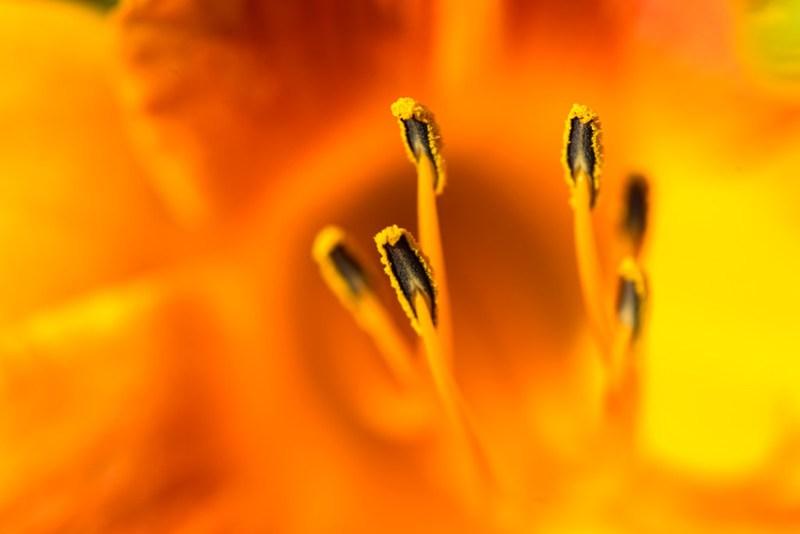 Very Orange..