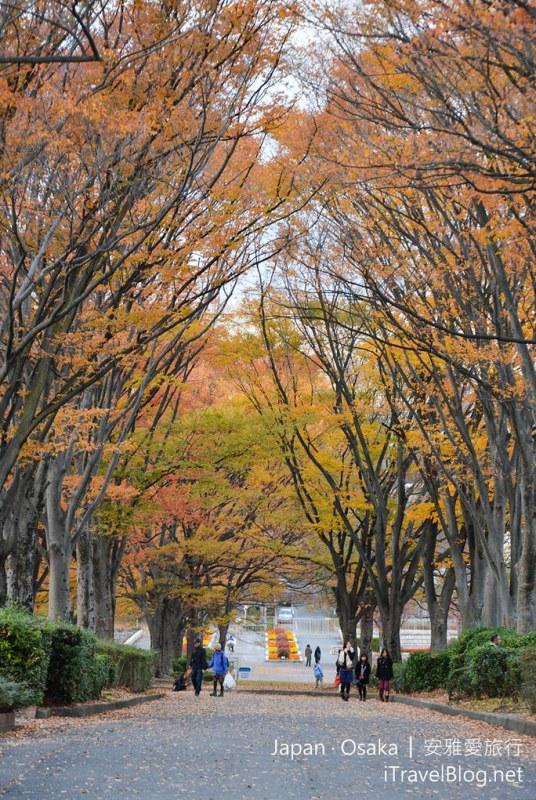 大阪赏枫 万博纪念公园 31
