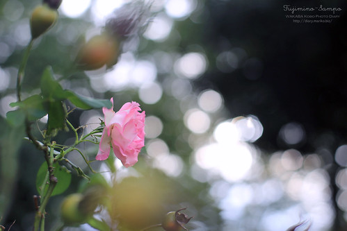 20141009-IMG_9917