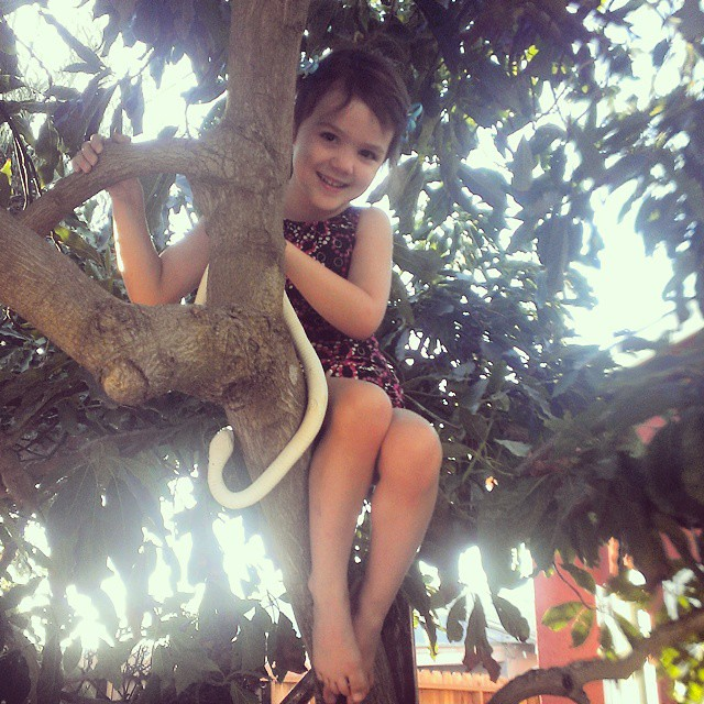 My tree climber...no tree too tall!