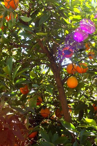 teh oranges