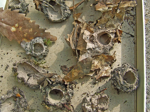 periodical cicada tubes