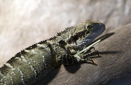 Uno de los reptiles que posaron para nosotros