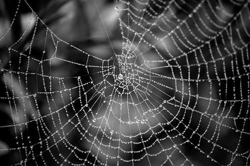 Cobweb 4