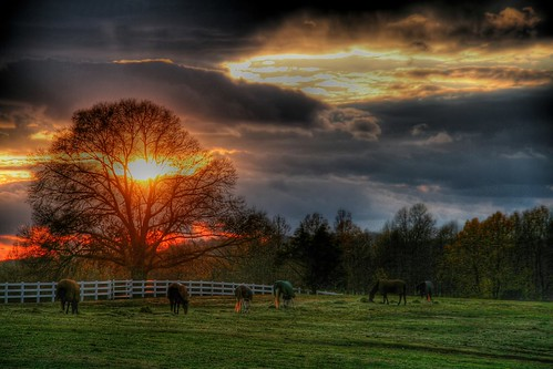 An Equine Sunset