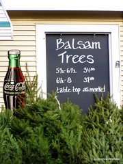 Balsam Trees for Sale in Williamsburg, MA