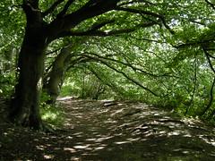 The Ridgeway, Chilterns, UK