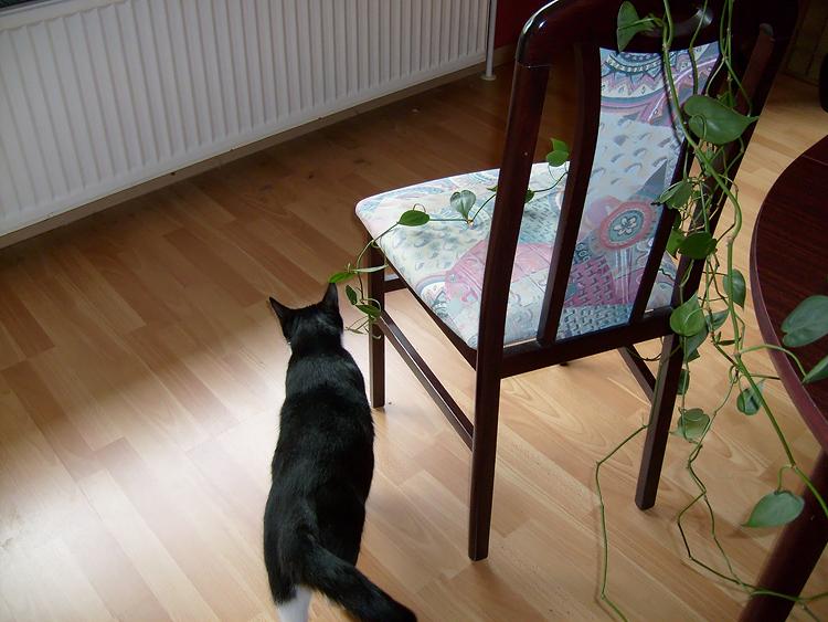 Moritz Day # 223 / 365 13. Oktober 2008