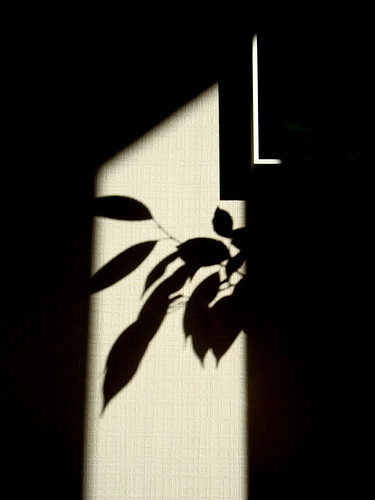 frame shadow green