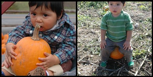 Pumpkin Patch 07/08