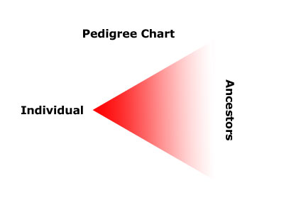 Pedigree-Chart